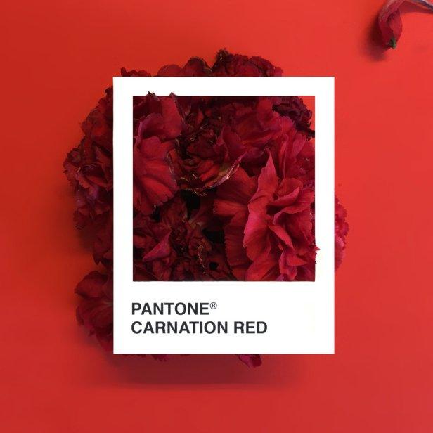 pantone-flowers-1