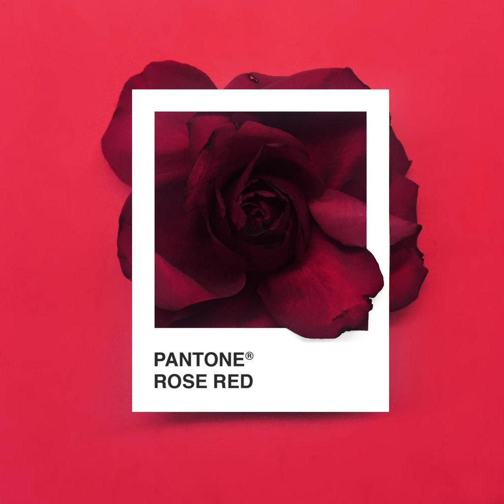 pantone-flowers-10