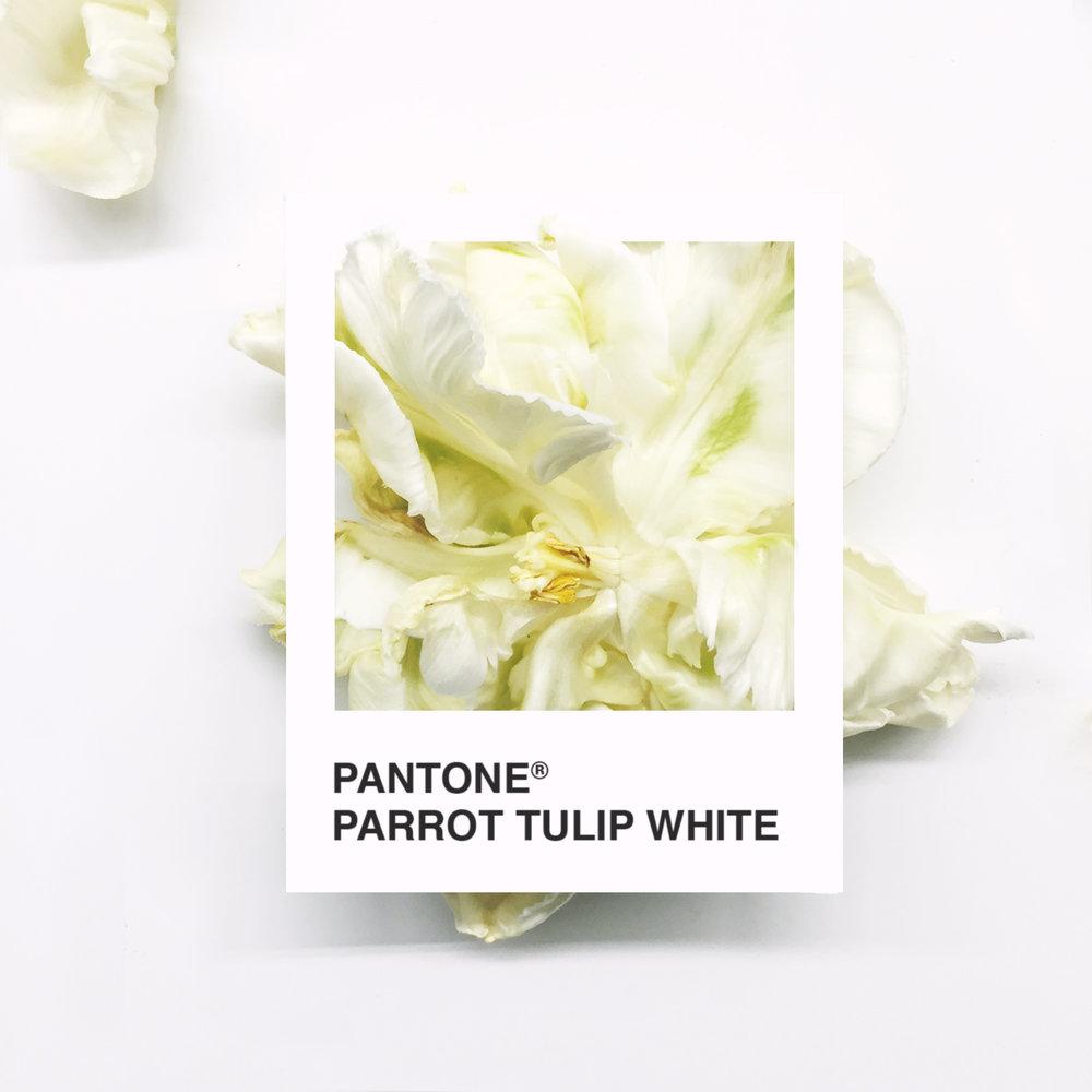 pantone-flowers-11