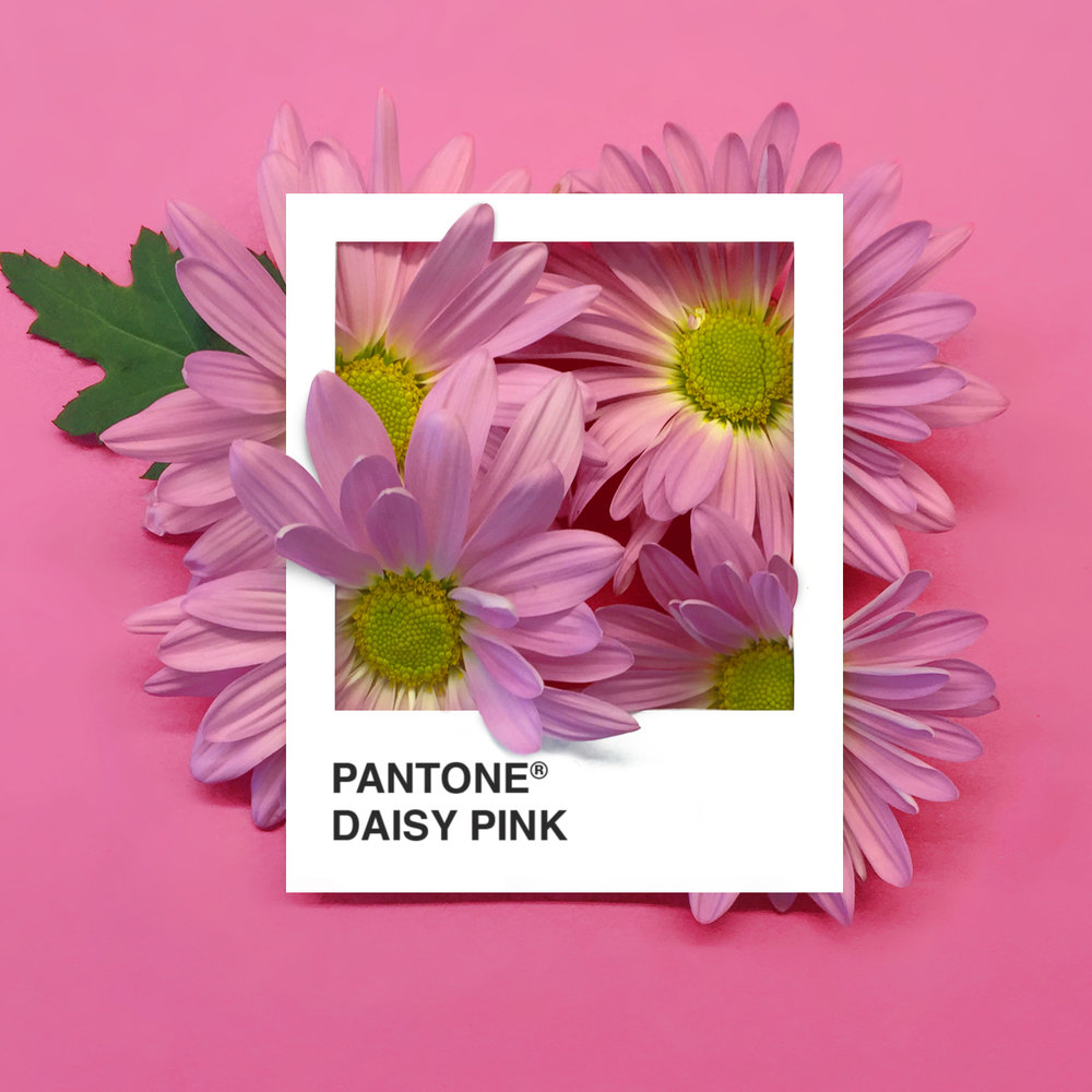 pantone-flowers-2