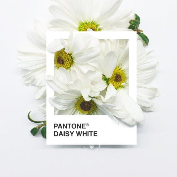 pantone-flowers-3