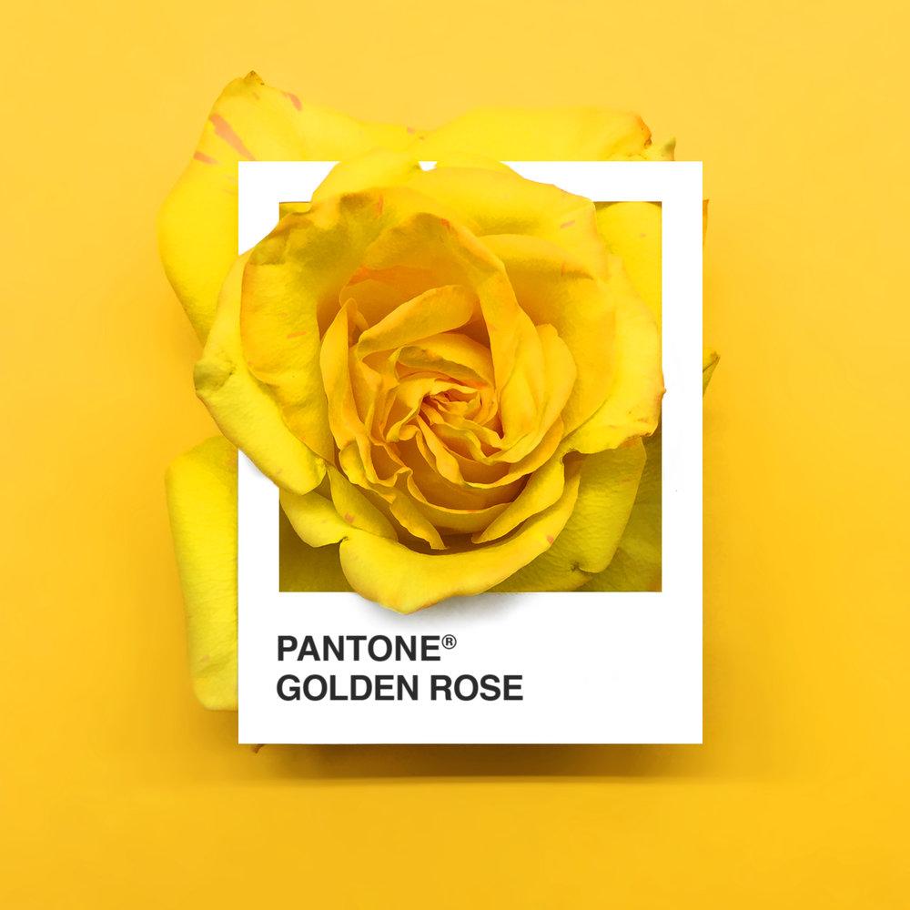 pantone-flowers-4