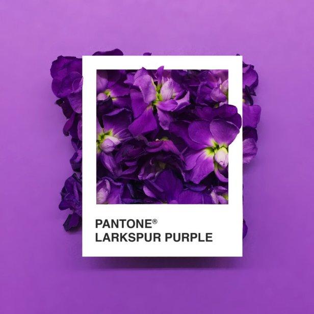 pantone-flowers-5