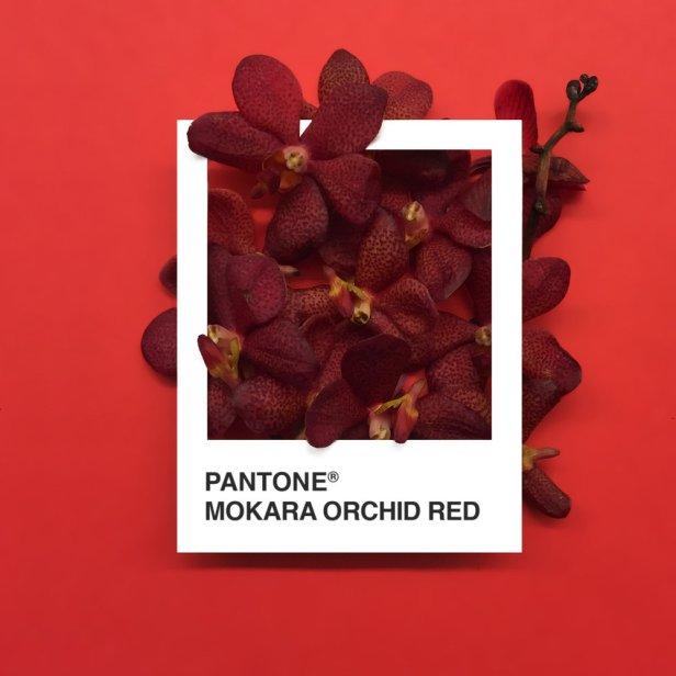 pantone-flowers-6