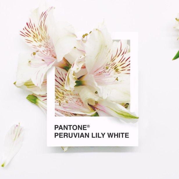pantone-flowers-7
