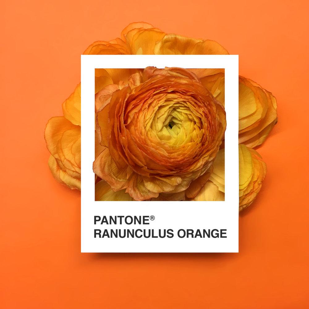 pantone-flowers-8
