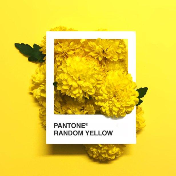 pantone-flowers-9