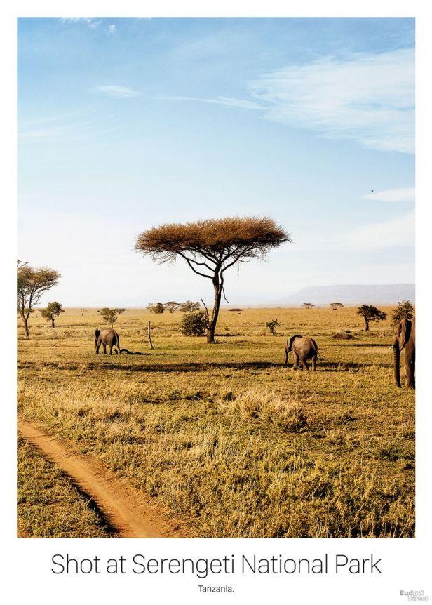 16_travel-poster-tanzania-safari